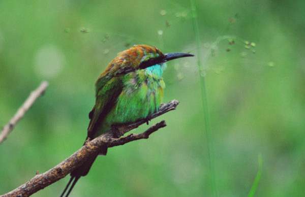Udawalawe-wildlife-sanctuary-Bird
