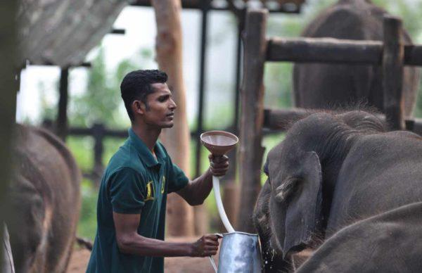 Elephant orphanage udawalawe