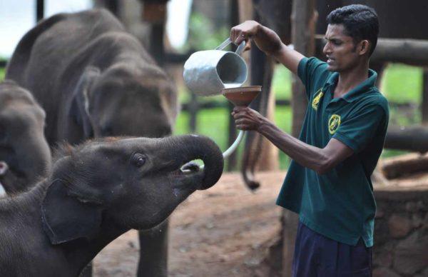Udawalawe_Elephant_Transit_Home_07