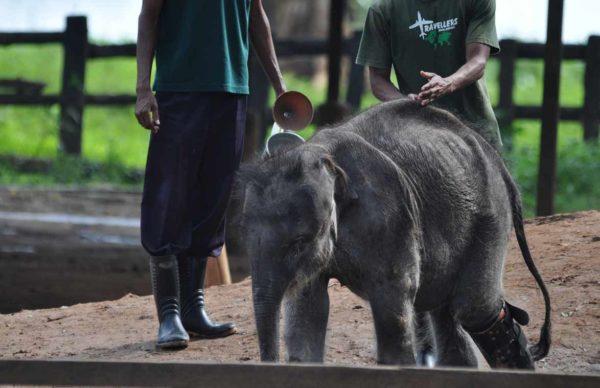 Udawalawe_Elephant_Transit_Home_08