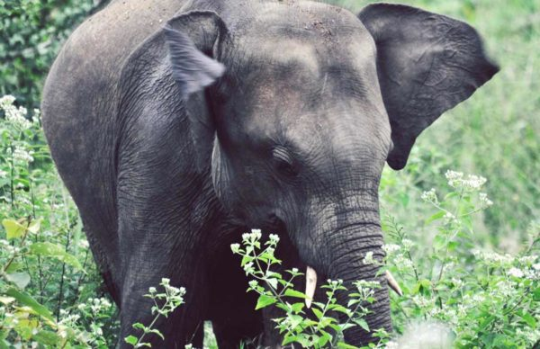 Baby Elephant with task